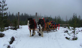 Sleigh ride through the surrounding forrest area at Elkins Resort on Priest Lake