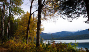 Trees on the shore of Priest Lake