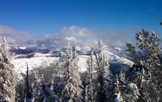 Snow Coated Trees Near Elkins Resort