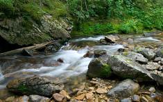 Stream near Elkins Resort